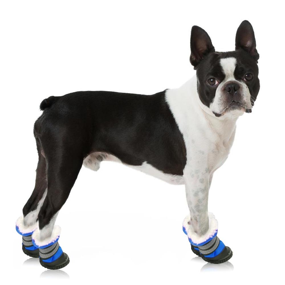 Köpek ayakkabısı