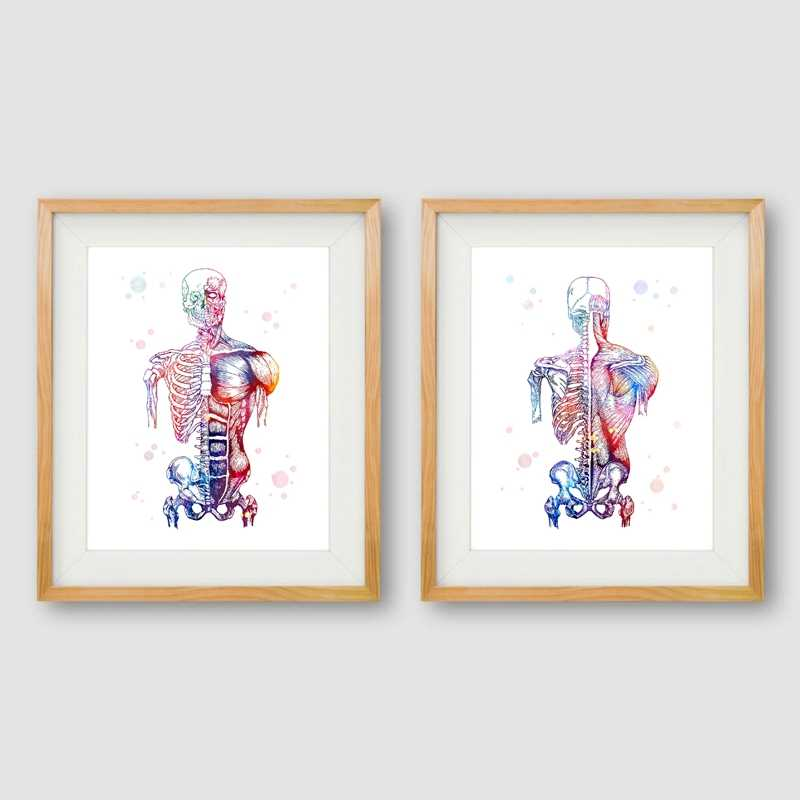 Human Muscles Canvas Art Print And Poster Watercolor Muscular System Skeleton Anatomy Painting Body Art Medical Print Wall Decor