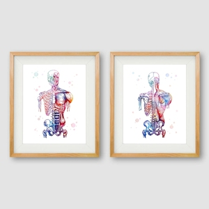 Human Muscles Canvas Art Print And Poster Watercolor Muscular System Skeleton Anatomy Painting Body Art Medical Print Wall Decor(China)