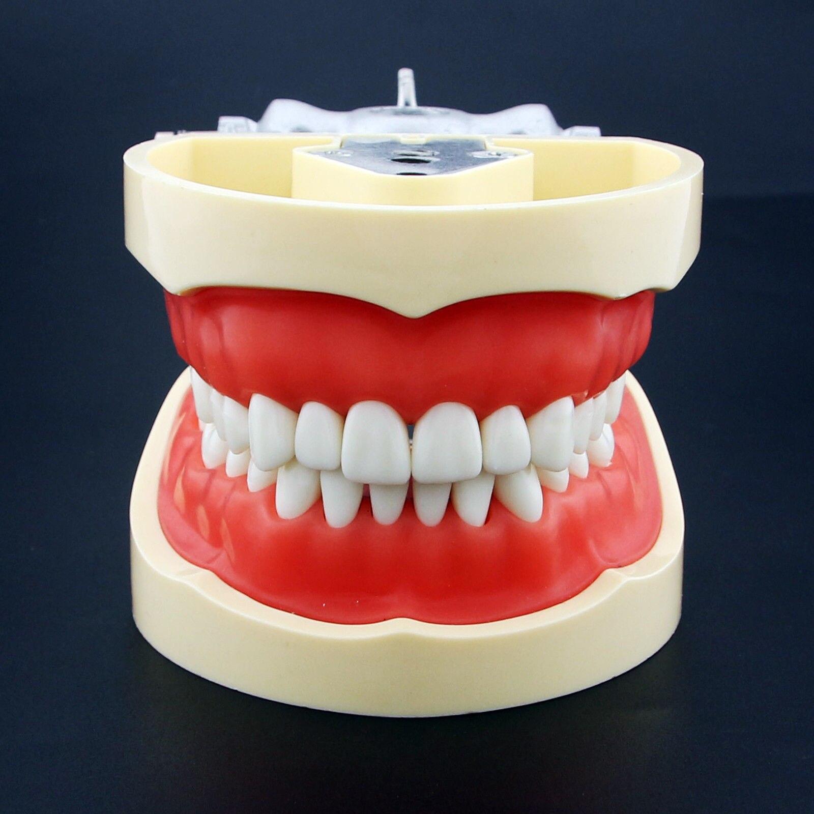Güzellik ve Sağlık'ten Diş Beyazlatma'de Kilgore Nissin Tipi Diş Typodont Modeli 200 Çıkarılabilir Diş'da  Grup 1