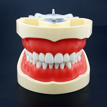 Kilgore Nissin Tipi Diş Typodont Modeli 200 Çıkarılabilir Diş