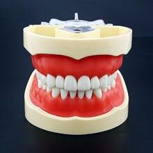Kilgore Nissin typu stomatologiczne Typodont Model 200 z zdejmowane zęby