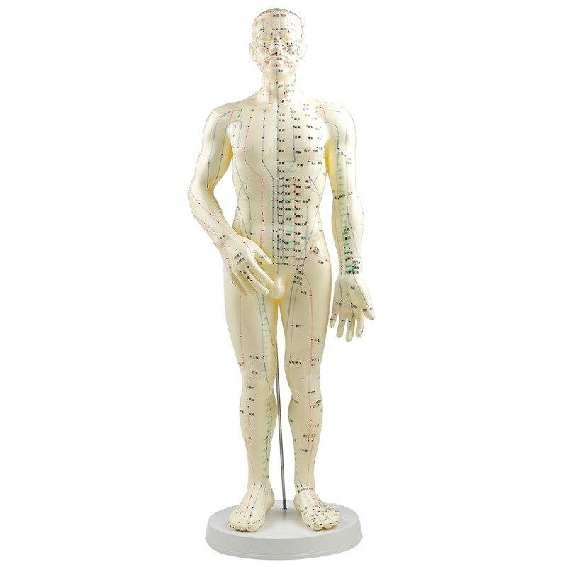 PVC Meridian Modell Menschen Akupunktur Punkt Menschlichen Körper ...