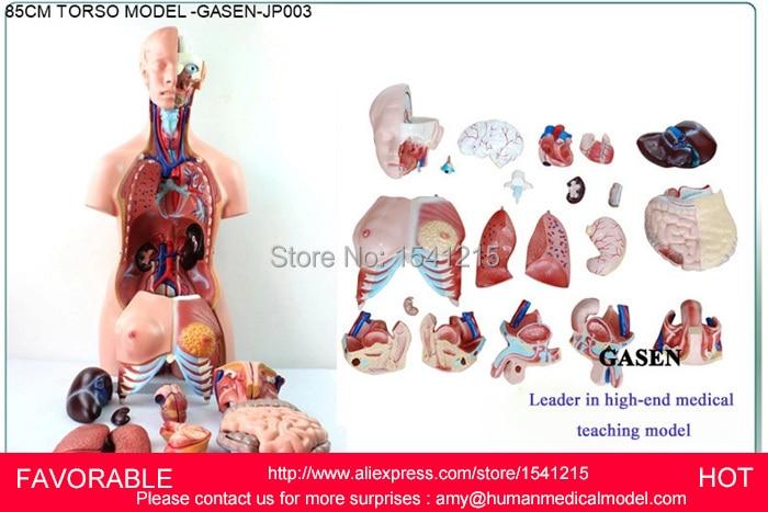 US $360 0 |MUSCLE ANATOMY MODEL MEDICAL ORGANS DUMMY MEDICAL MANNEQUIN  HUMAN MUSCLE ANATOMY ORGANS ANATOMICAL TORSO ANATOMICAL GASEN JP003-in  Medical