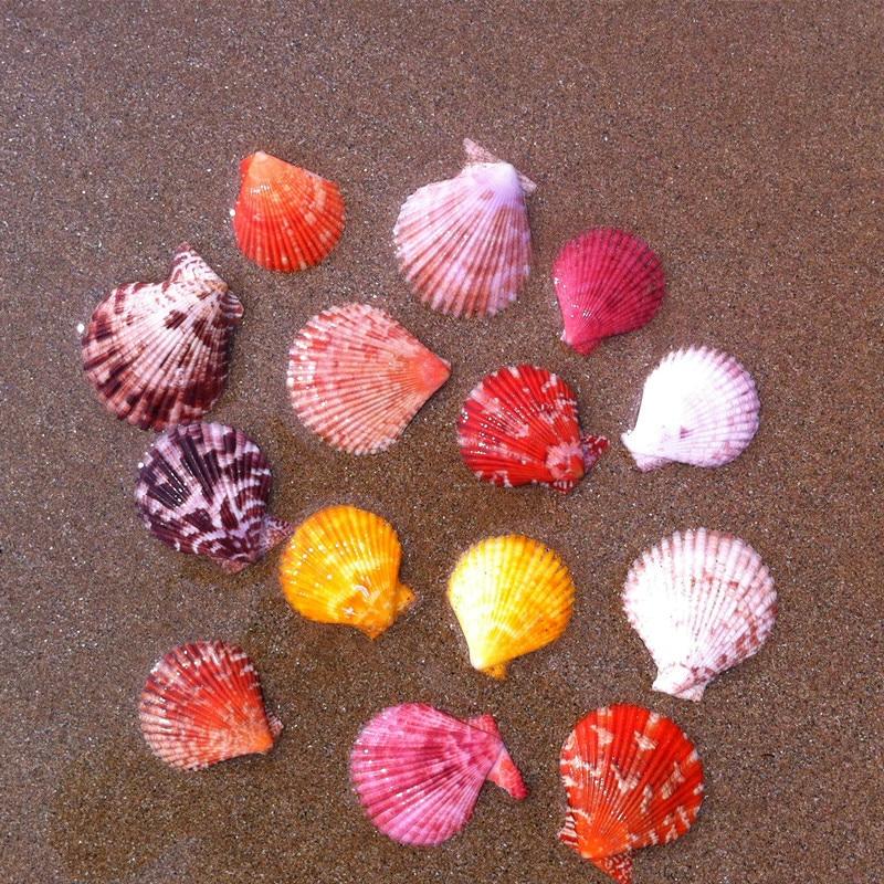 20pcs/lot Natural Craft Colored Scallops Seashell 3-5cm Decor Seashells Natural Decor Ornament Mediterranean Marine Decoration