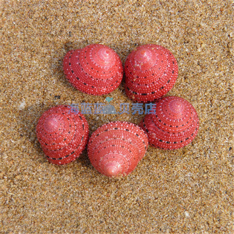 Strawberry Bell Snail 2CM Natural Conch Shell Rare Snail Shell Collection Girlfriend Gift Lovely DIY Micro-landscape Decorations