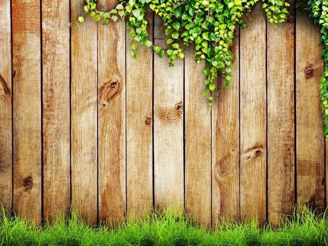 De heldere groene gras gratis fotografie achtergronden houten