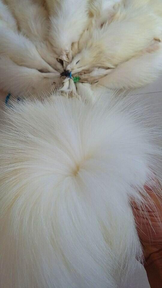 Véritable peau de peau de raton laveur blanc naturel tannée véritable/fourrure de bronzage de raton laveur avec avantage - 4