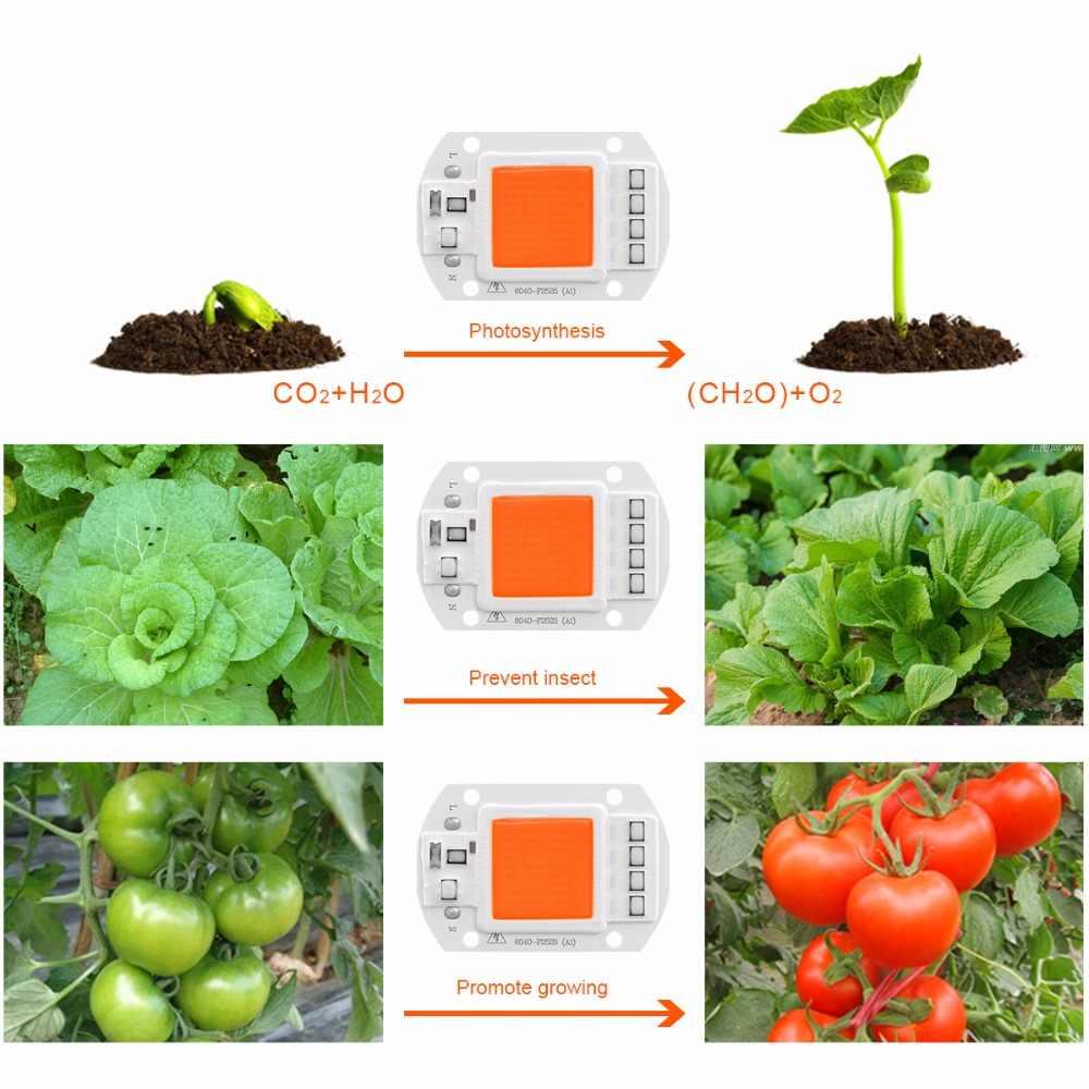 220V Full Spectrum COB LED grow light chip 20W 30W 50W LED lamp 380-840nm DIY Grow light Floodlight Indoor Plant Grow & Flower