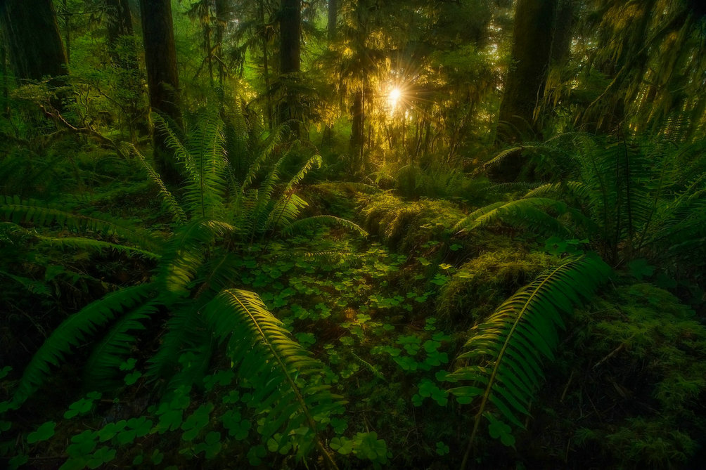 jungle trees wood dark light photography studio background High quality Computer print scenic photo backdrop|Background| |  -