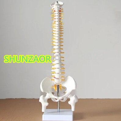 spinal column model 45cm Sitting Posture Model for Medical Rehabilitation Training, Human Spine Model spinal