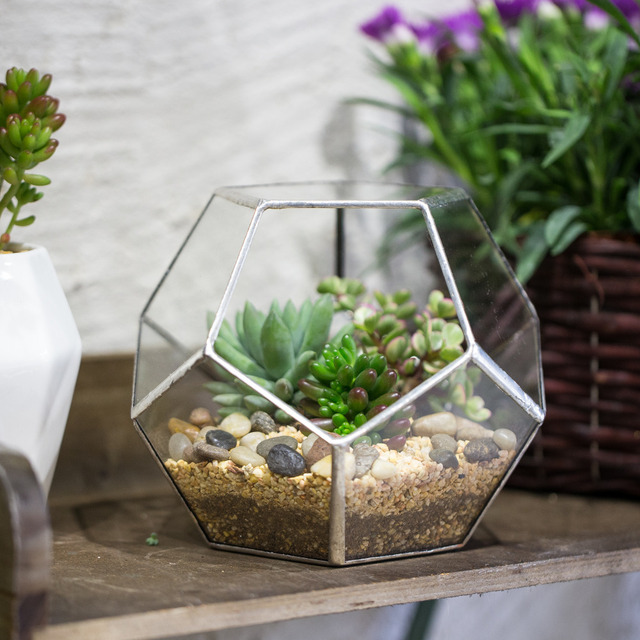 15cm desktop display succulent fern moss air plants planter fairy garden polyhedron glass geometric terrarium bonsai - Fairy Garden Plants