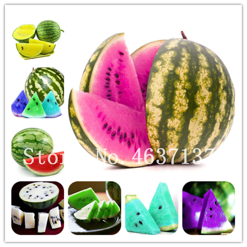 20 Pcs Mix Watermelon Bonsai, Yellow Blue White Red Flesh Sweet Fruit Plant Organic Russian Heirloom Fruit Vegetable Home Bonsai