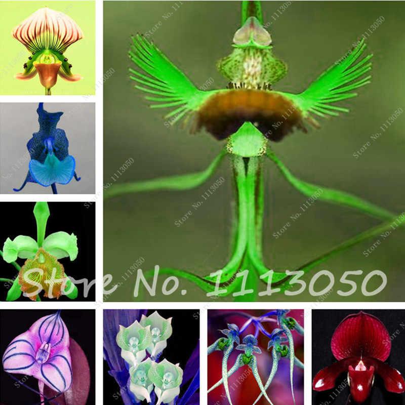 100 Pcs Flower Pots Planters Monkey Face Orchids bonsai Man Orchid Multiple Varieties Bonsai Potted Plants for Home & Garden