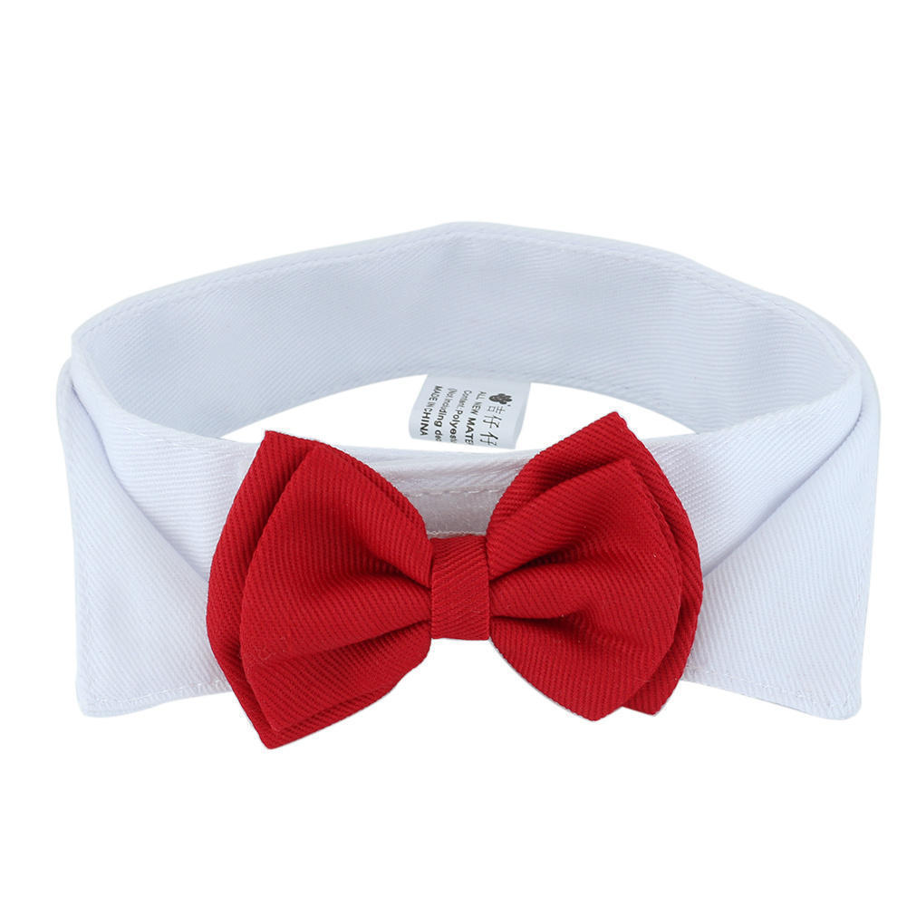 Dog Collar And Tie