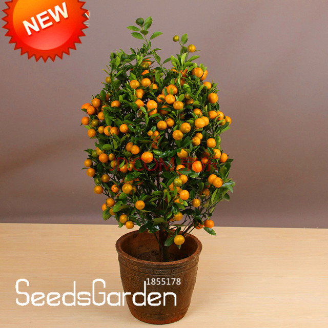 Promotion!100pcs/Pack Balcony Patio Potted Fruit Trees Planted Bonsai  Kumquat Garden Orange Flores
