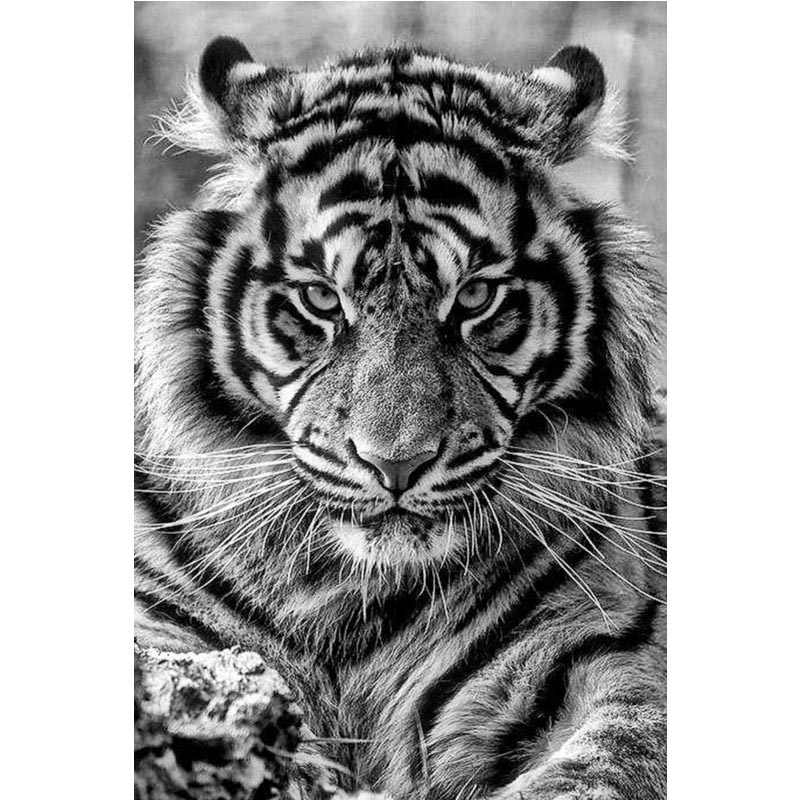 Custom animal king tiger  canvas Poster home Decoration cloth fabric wall poster print Silk Fabric Print 27X40 cm