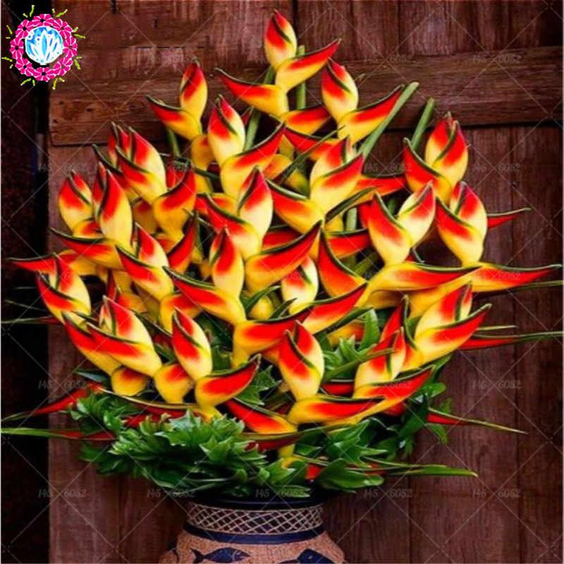 100 ชิ้น/ถุง Strelitzia ดอกไม้ Bonsai พืชสวรรค์นกดอกไม้ยืนต้นออกดอกในร่มพืชสำหรับพืชสวนบ้าน