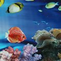 Durable Background Aquarium Ocean Landscape Poster Fish Tank Background