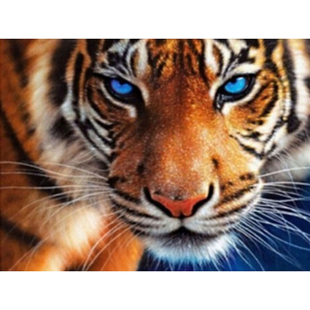 Tiger with Blue Eyes