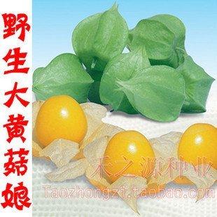 10pcs/bag yellow Lanterns fruit vegetable Seeds DIY Home Garden