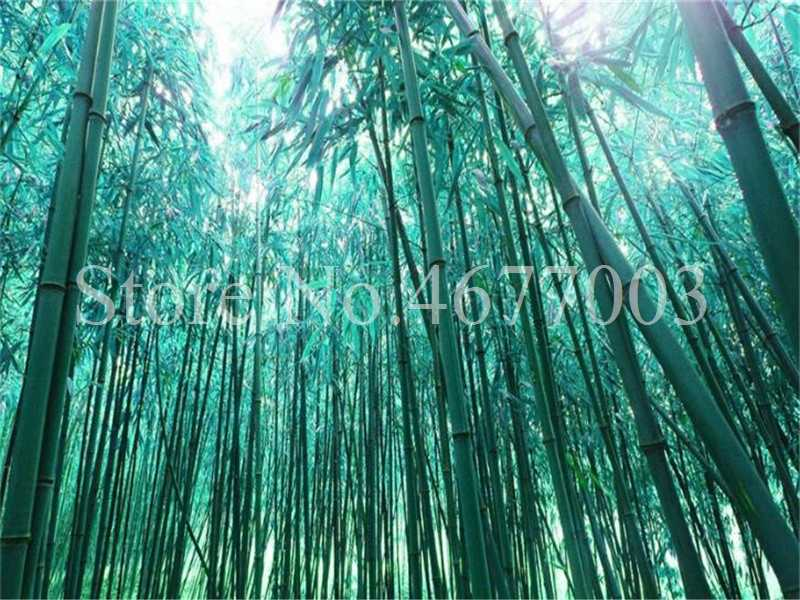 20 pz/borsa di Bambù Bonsai Pianta Fresca Gigante Arcobaleno di Bambù Bambu Pianta Bambusa Lako Albero Pianta Pianta Perenne Per La Casa Giardino