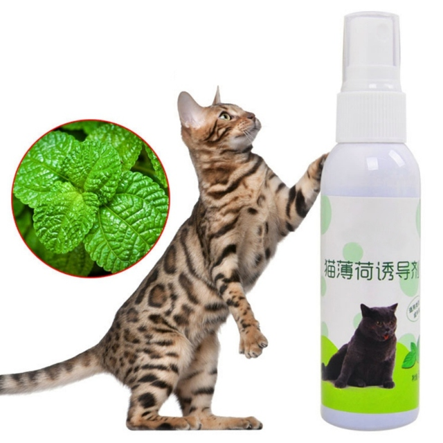 50 ml Naturale Estratto di Erba Gatta Spray Cat Scratch Piatto Induttore Fresco