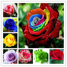 garden flowers Seeds Pot Bonsai Rose Seed Professional Seedling floer Plant/ Vary Colors Selection /100 pcs