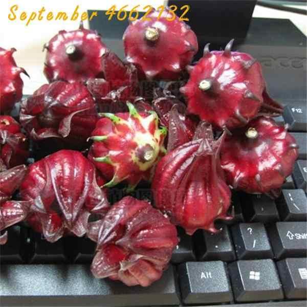 100 шт./пакет Roselle iliбискус Roselle сок чай Гибискус сабдарифа поддерживать красоту и держать молодой бонсай сад цветочное растение