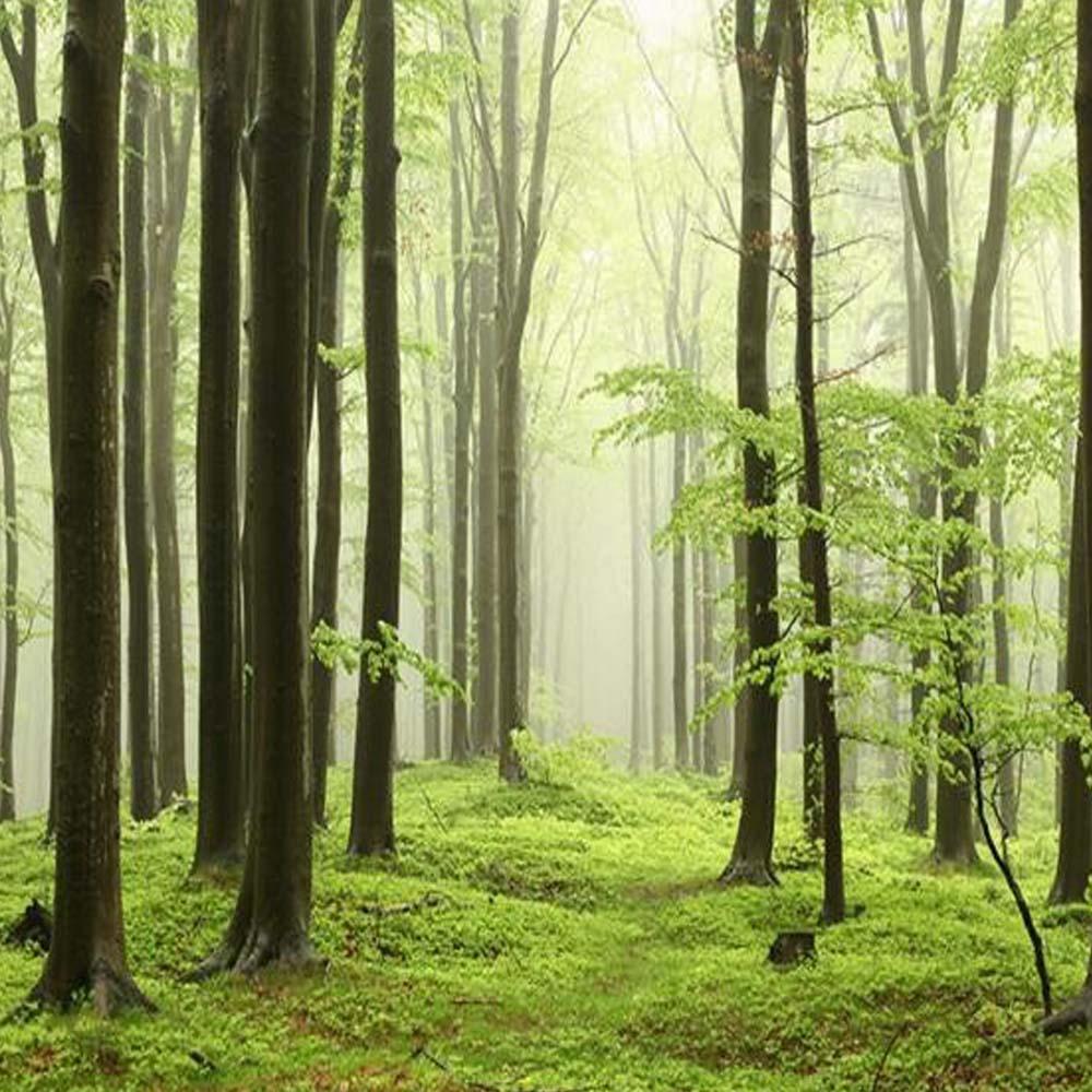 Hohe qualität großhandel grünen baum tapeten aus china ...
