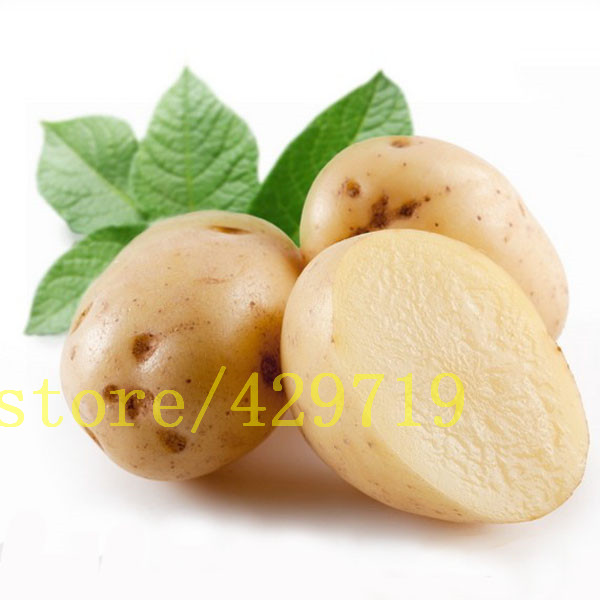online kaufen gro handel kartoffel pflanze blume aus china kartoffel pflanze blume gro h ndler. Black Bedroom Furniture Sets. Home Design Ideas