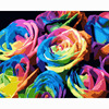 Colorful Rose Flowers 16x20inch No Frame Paint By Numbers Home Decor Wall Art Diy Digital Oil