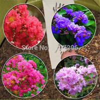 Lagerstroemia seeds,potted plants, planting seasons, flowering plants - 50 pcs / lot