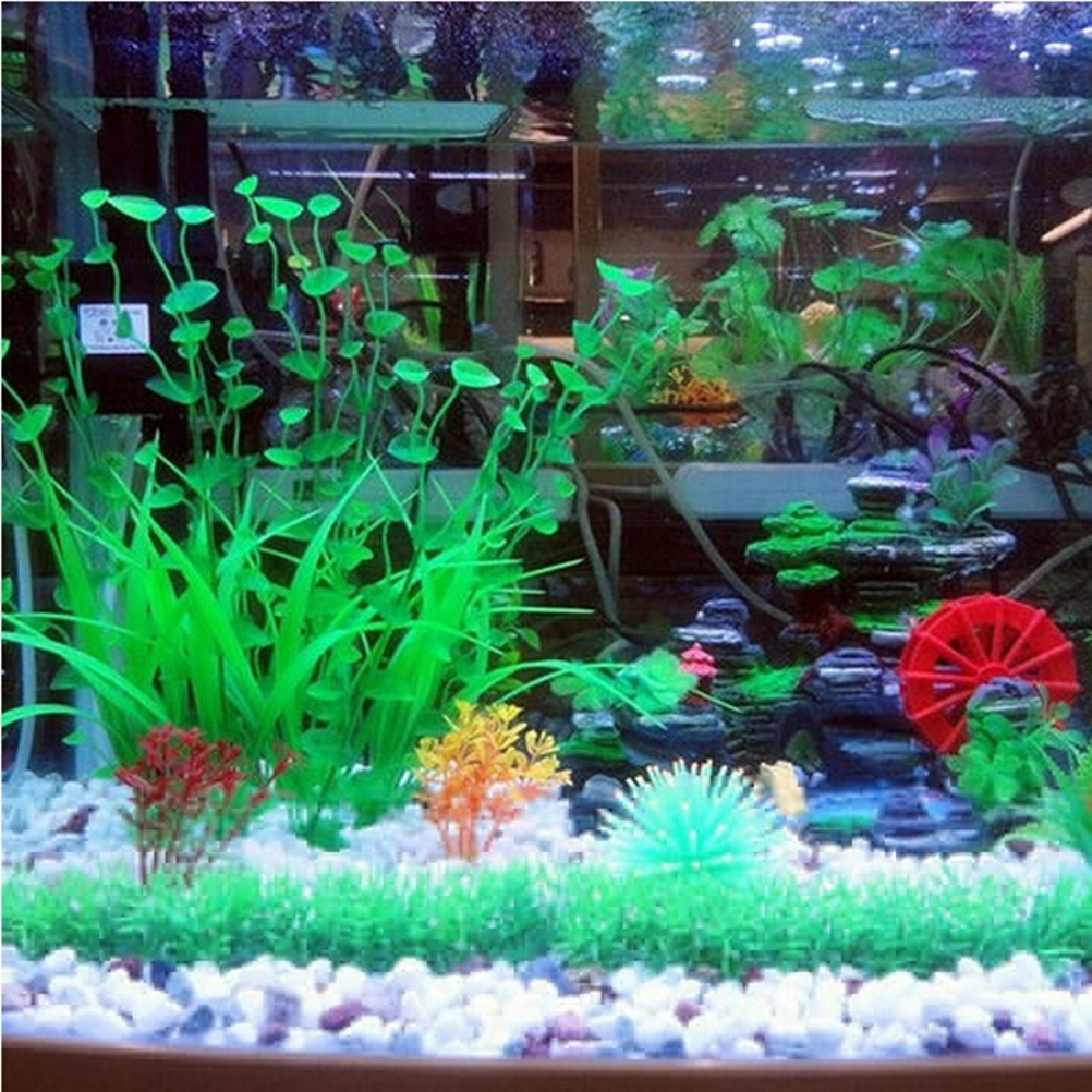 Aquariums and accessories: a selection of articles