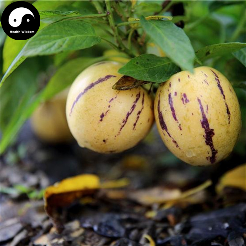 Buy Fruit: Buy Melon Eggplant Fruit Semente 30pcs Plant Ginseng Fruit