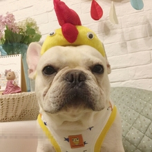 b732fa44a15 Buy hat for french bulldog and get free shipping on AliExpress.com