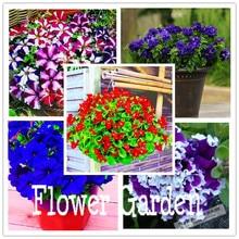 24 kinds hanging petunia seeds,garden Petunia, Petunia Seeds, Mixed color – 100 seeds/lot,#OIMVY8