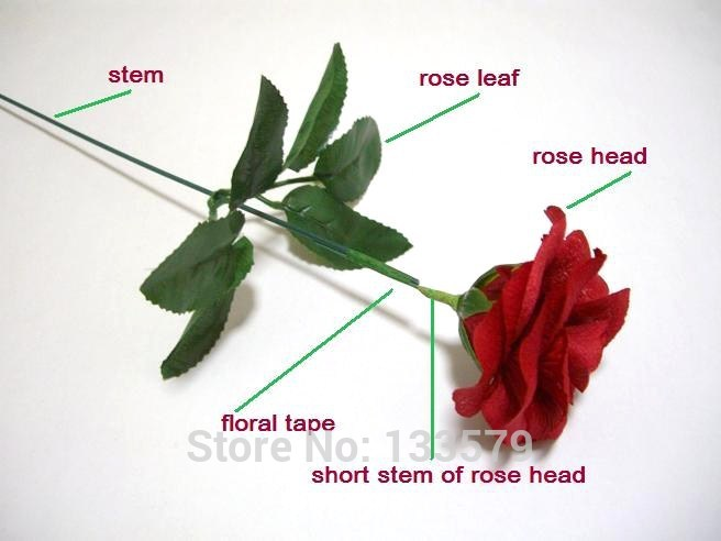 Parts Of A Rose - Wiring Diagrams •