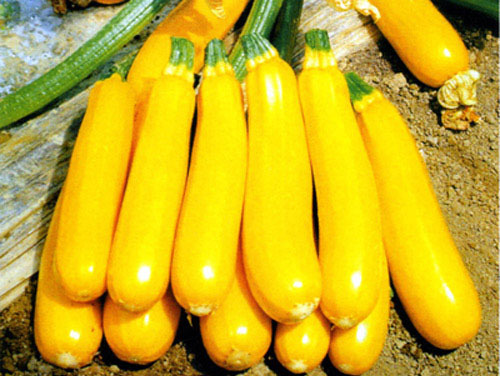 Image result for cassabanana