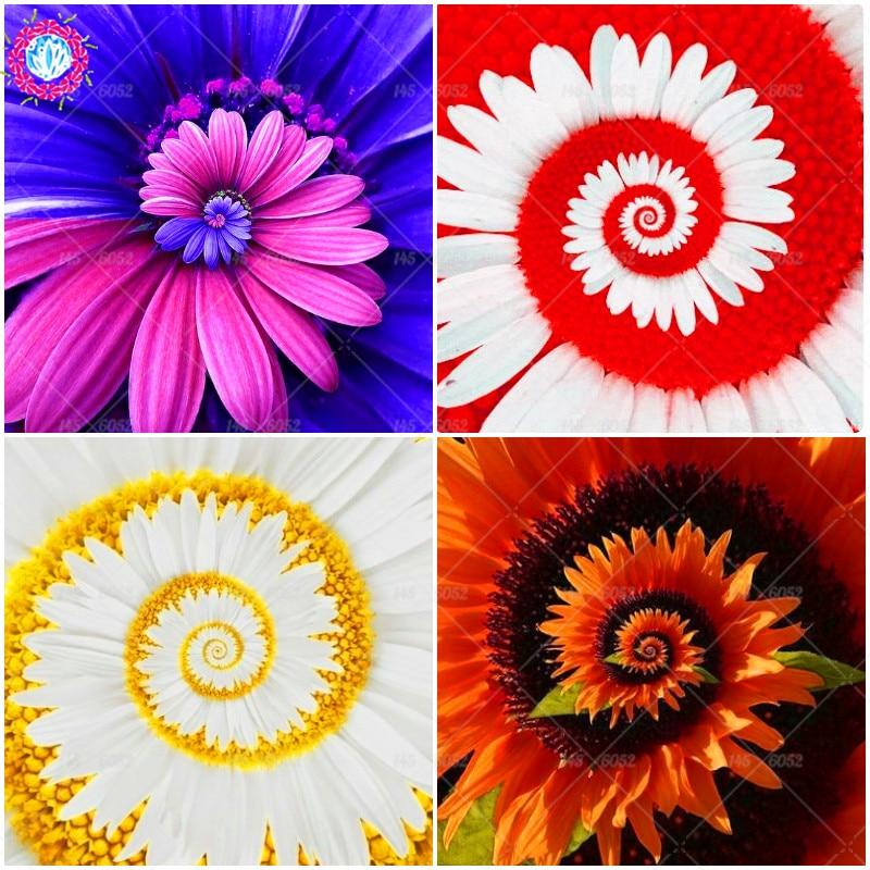 30 шт./пакет ромашка редкий цветок семена многолетника для внутренних помещений комнатные растения для дома и сада четыре сезона цветения Бо...