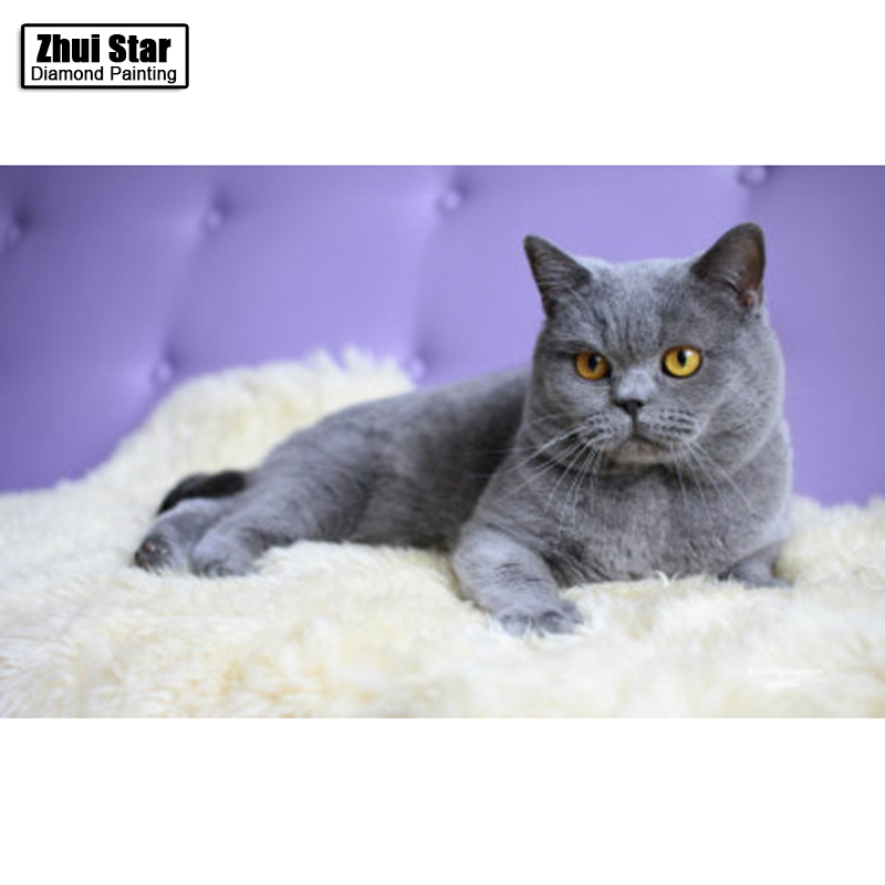 Where can i buy a russian blue cat