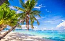 HUAYI Fotografia Pano de Fundo Verão Seaside Cenário Árvore Céu Azul Photo Studio Fundo Palm XT-7189