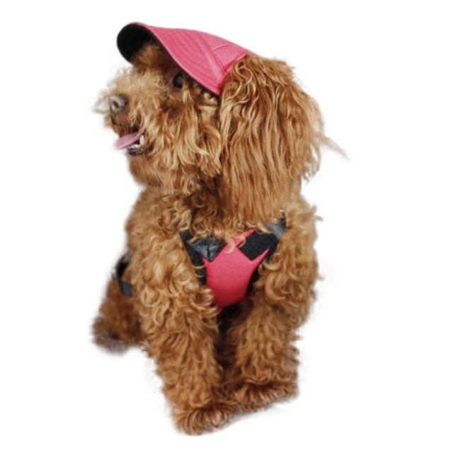313557b8650 10 Styles Summer Fashion Dog Hat With Ear Holes Canvas Baseball Cap For  Small Pet Dog Outdoor Accessories Hiking Pet Cute Cap