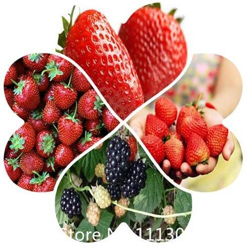 Nombres de frutas compra lotes baratos de nombres de - Semillas de frutas y verduras ...
