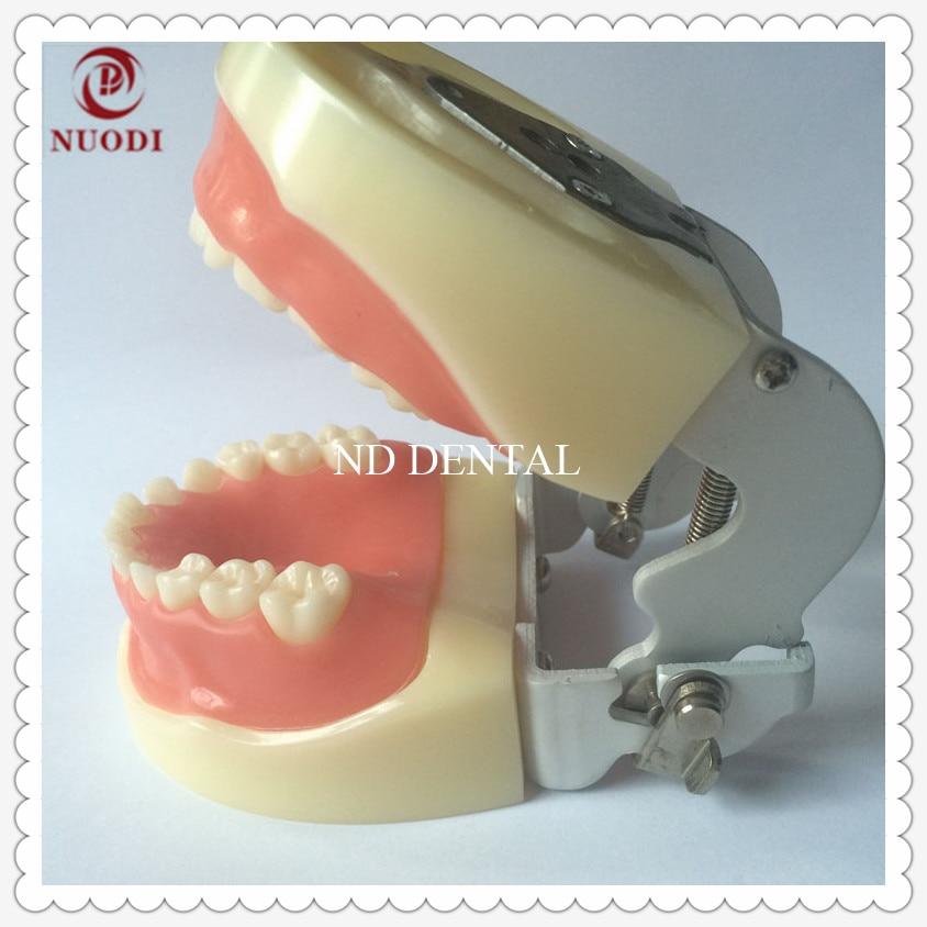 Dental Child Tooth Model   Children's Oral Dental Model Early Children Teaching Full Mouth