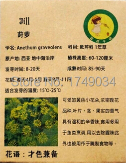 Lucy's garden Store Germination rate 99% dill seeds, aromatic plant seeds Fennel, easy planting seed - 50 particles