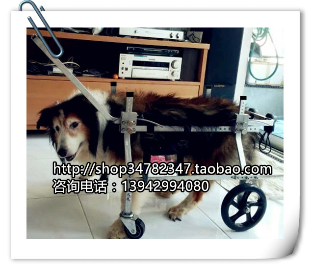US $379 0 |Large pet wheelchair / big dog walking wheelchair / animal  wheelchair / dog scooter / paralyzed dog scooter-in Agility Equipment from  Home