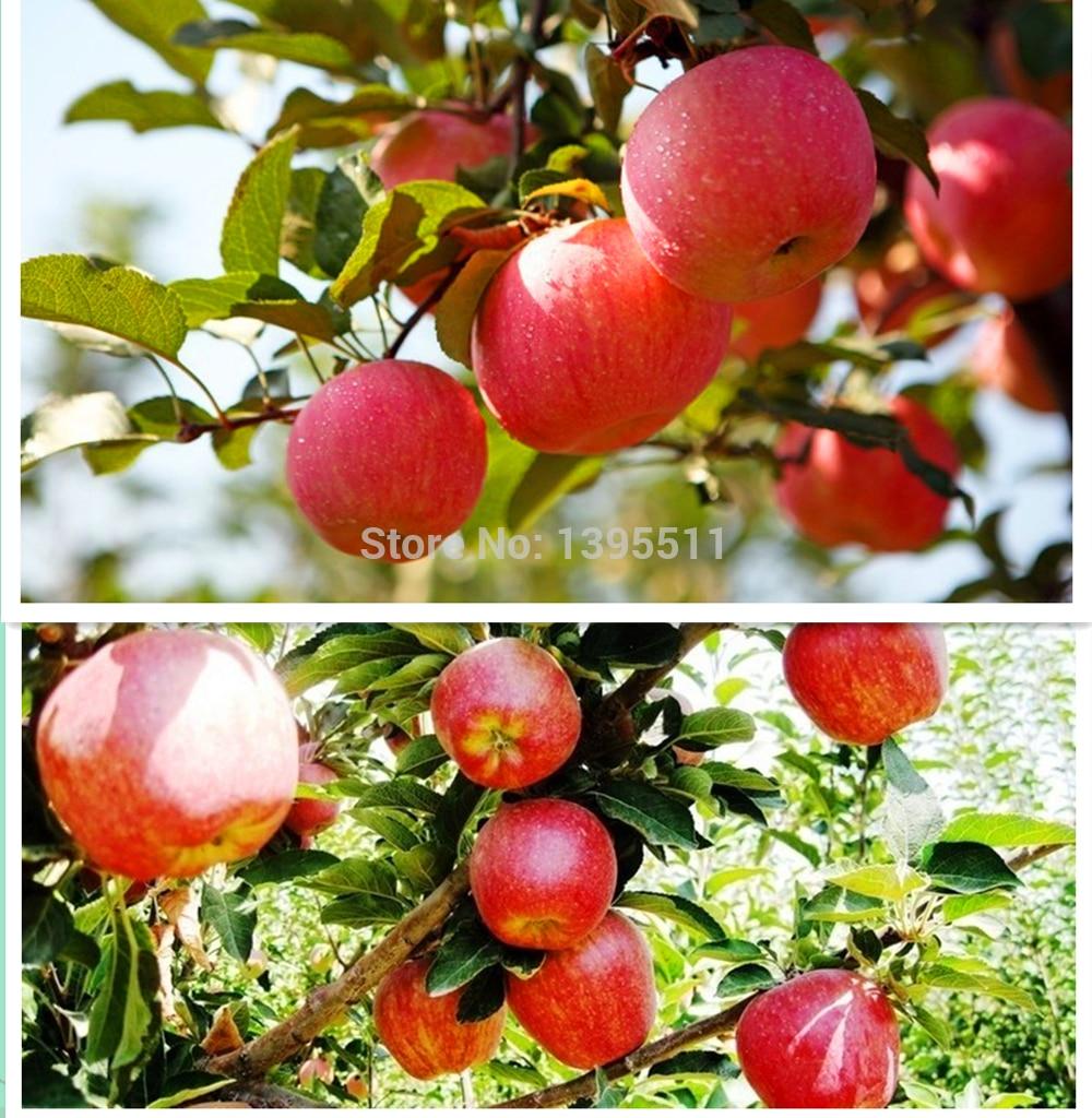 яблоки цена