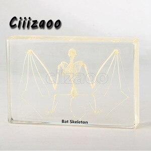Image 1 - Vleermuis Skelet Specimen Dier Presse papier Taxidermie Collection Ingebed In Clear Lucite Blok Inbedding Specimen