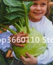 sementes` plantas Netherlands fruit plantfruit plant imported kohlrabi bonsais green vegetable bonsai 100pcs